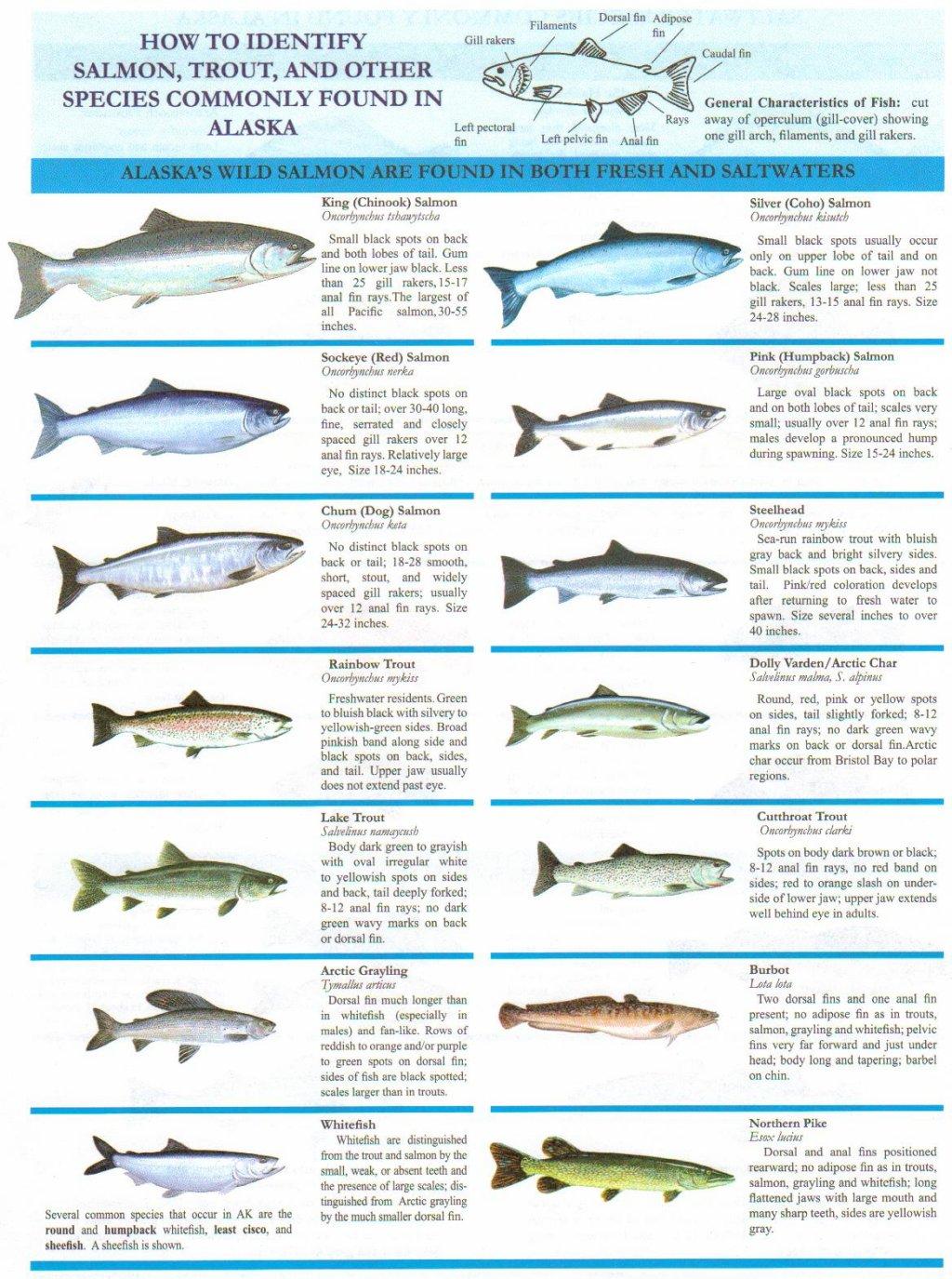 General Info - Fly Fishing Kenai Peninsula Alaska
